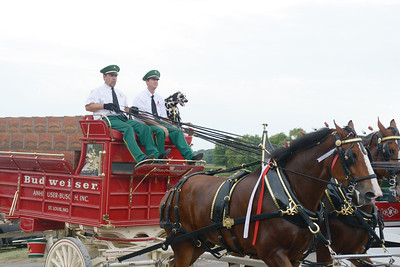 Clydesdales At The Monroe County Fair